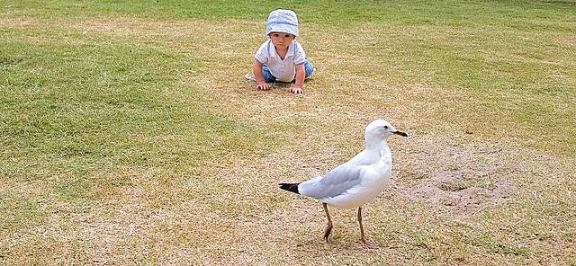 Gaviota y niño