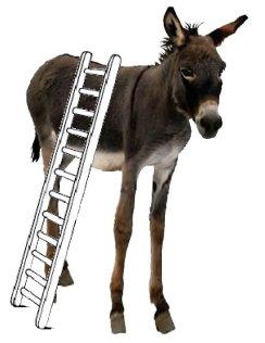 Bajarse del burro