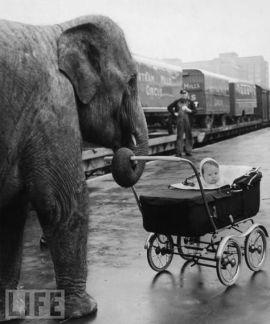 Elefante paseando a un bebé