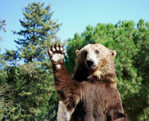 oso-saludo