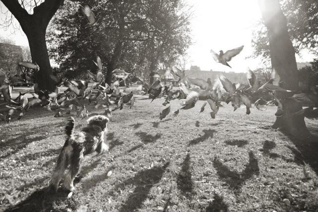 Cazando palomas