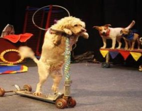 circus-dogs-