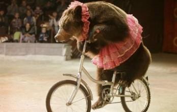 The Circus Bear